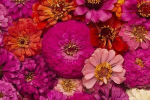 la composition de belles fleurs fond d'écran photo