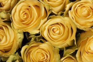 la composition fond de belles fleurs photo