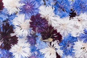 le magnifique fond d'écran de fleurs d'arrangement photo