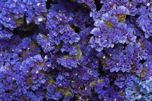 le magnifique fond de fleurs d'arrangement photo