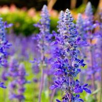 fleur tropicale violette dans le jardin photo
