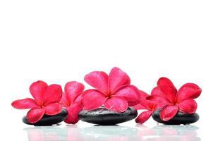 pierres zen à la fleur de frangipanier photo
