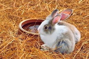 le lapin est assis sur des meules de foin ou de l'herbe sèche photo