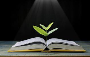arbre grandit à partir d'un livre avec une lumière qui brille pour acquérir des connaissances photo