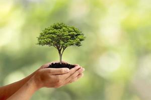 des arbres sont plantés au sol entre des mains humaines avec des arrière-plans verts naturels, le concept de croissance des plantes et de protection de l'environnement. photo