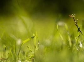 plan macro sur l'herbe verte avec de la rosée par une journée ensoleillée photo
