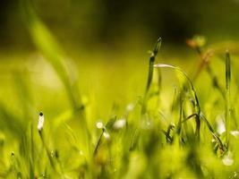 herbe verte avec rosée par une journée ensoleillée photo