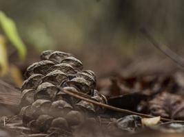 pommes de pin sur le sol forestier avec une faible profondeur de champ intentionnelle photo