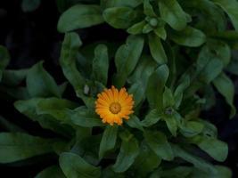 Belle petite fleur orange sur fond de feuillage vert flou photo