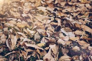 Feuille sèche sur le sol dans le parc abstrait texture photo