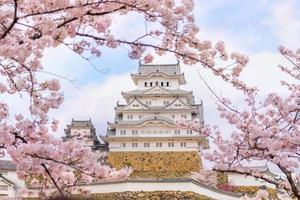château himeji avec saison des cerisiers en fleurs sakura photo