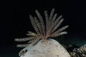 récif de corail et plantes aquatiques dans la mer rouge, eilat israël photo