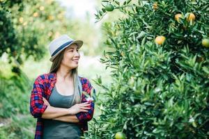 femme récoltant une plantation d'oranges photo