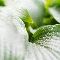 fond naturel vert, fond de verdure photo