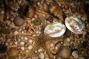 poisson séché et coquillage photo