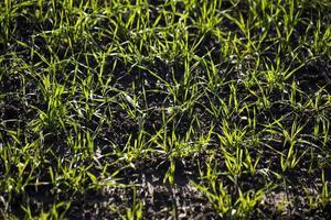 domaine de la ferme verte dans la nature photo