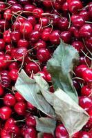 cerise aux fruits délicieux bio photo