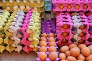 aliments protéines poulet bio oeufs crus photo