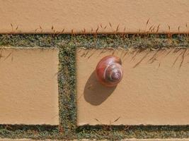 escargot limace sur un mur photo