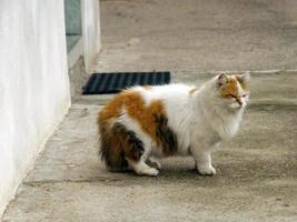 chat sur la chaussée en béton photo