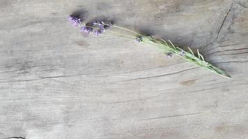 frasz pousses de fleur de lavande sur une vieille table en bois photo