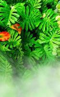 jardin vertical avec feuille verte tropicale avec brouillard et pluie photo