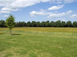 vue sur un champ à une rangée d'arbres verts et un ciel d'été photo
