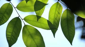 gros plan belle vue sur les feuilles vertes de la nature sur la verdure floue photo