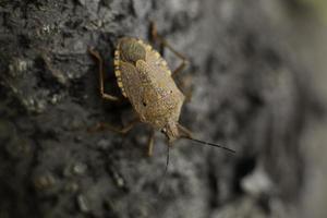 macro d'un bug rouge photo