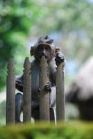 forêt des singes d'ubud à bali photo