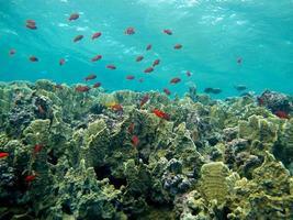 monde sous-marin incroyable de la mer rouge photo
