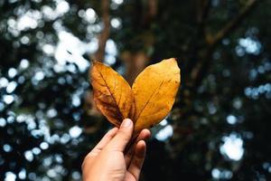 feuilles d'automne le premier jaune dans le jardin photo