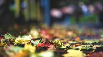 automne. feuilles juste tombées des plantes sur le trottoir photo
