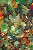 feuilles d'automne fraîchement tombées des plantes photo