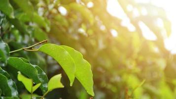les feuilles des arbres sont mouillées après avoir été exposées à la pluie le matin photo