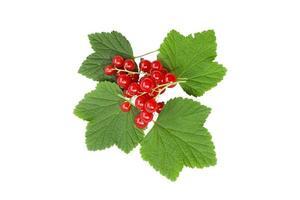 Fruits de groseille rouge isolé sur fond blanc photo