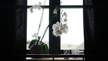 pot de fleurs près d'une grande fenêtre. orchidée blanche sur le rebord de la fenêtre photo