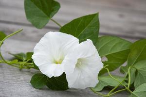 loche avec des fleurs blanches sur un fond en bois. fond floral. photo