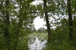 beau roseau de marais d'herbe poussant sur le réservoir à terre photo