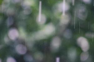 défocalisé du feuillage sous les gouttelettes d'eau de pluie. photo
