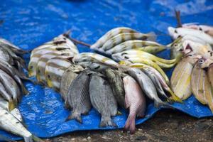 les fruits de mer crus assortis photo