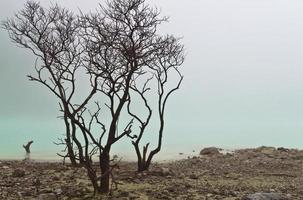 lac brumeux et arbre mort photo