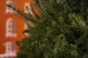 branches d'épinette en gros plan, partie d'un conifère vivant photo