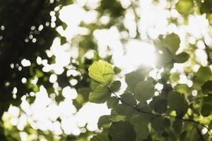le gros plan des branches des bois photo