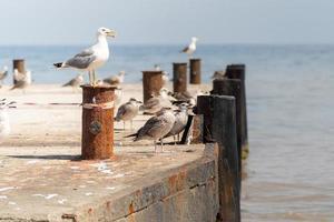 les mouettes affluent au bord de la mer noire photo