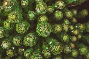 plantes vertes avec des gouttes de rosée poussant à l'état sauvage photo