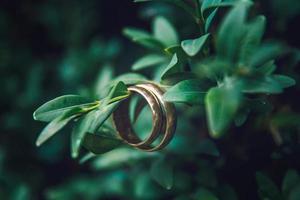 les anneaux dorés pendent magnifiquement sur les branches d'un buisson vert photo