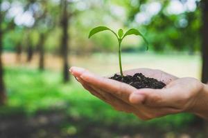 concept de la journée mondiale de l'environnement. plante tenant la main. photo