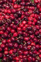 Cerises rouges mélangées biologiques fraîches exposées photo