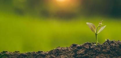 planter des arbres pour pousser dans le sol photo